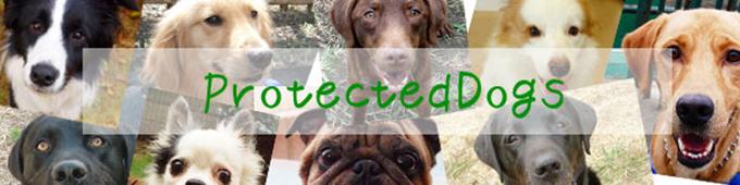 ProtectedDogsmainimg